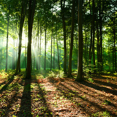 Consultoria Engenharia Florestal/Agronômica